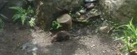 庭に出たネズミちゃん